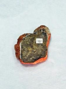 valentines day Dinosaur Coprolite