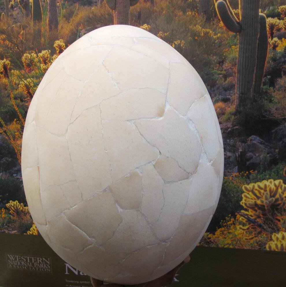 Elephant Bird Egg, Aepyonix Egg