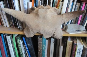 Fossil Crystals Bison skull and books
