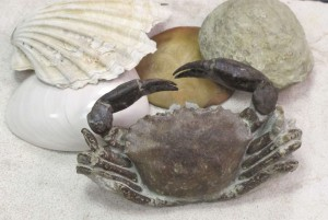 fossil crab and shells