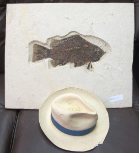 fossil fish and hat