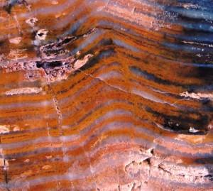 stromatolites Strelly pool Australia